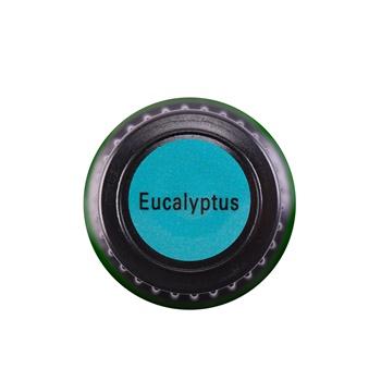 Eucalyptus (Globulus)